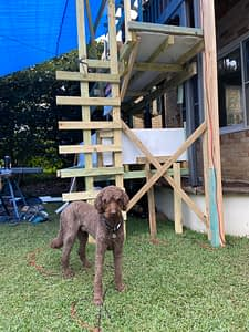 Cooper keeping watch...